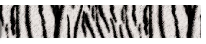 Fita - Zebra nº5