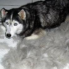 MagicFUR Grande - Cães